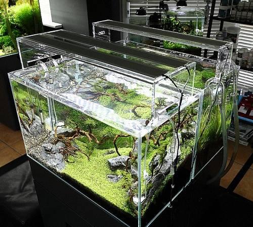 Все про подсветку аквариума и способах ее реализации с помощью светодиодов