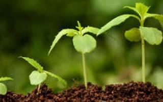 Лучшие средства для пышного цветения комнатных растений