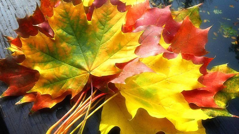 Идеи поделок из листьев своими руками