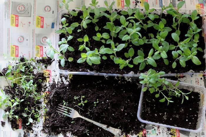 Свежий укроп круглый год. выращивание культуры из семян на балконе и подоконнике
