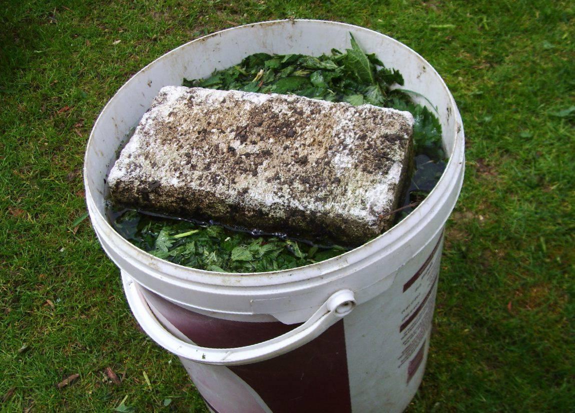 Использование редьки масличной как высокоэффективного осеннего сидерата