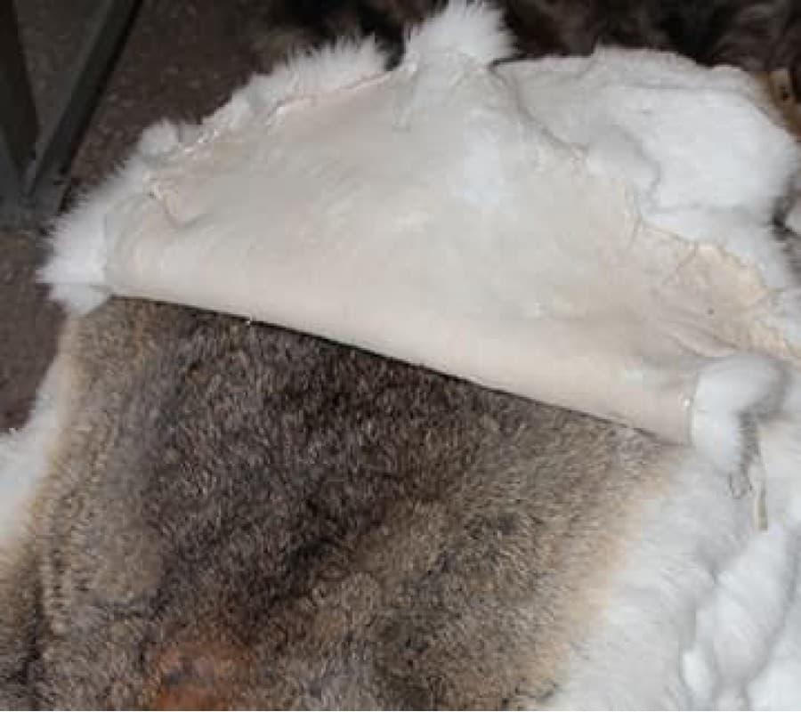 Выделка шкур кролика в домашних условиях: как правильно