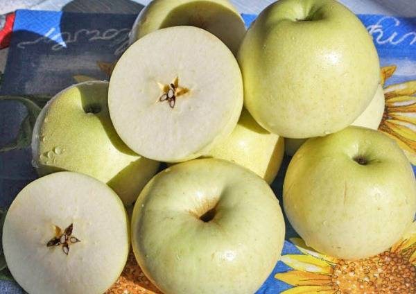 Какие сорта яблони лучше сажать на урале