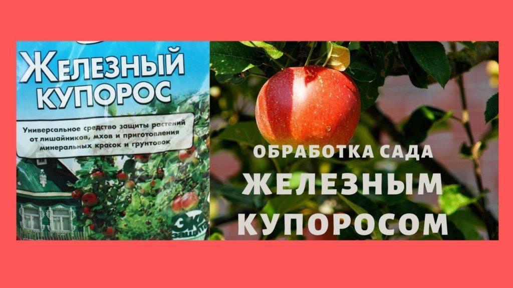 Как правильно развести железный купорос для обработки винограда летом, осенью и весной
