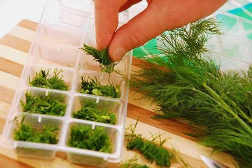 Соление, сушка, маринование и засолка как варианты заготовки кинзы для ароматных зимних обедов
