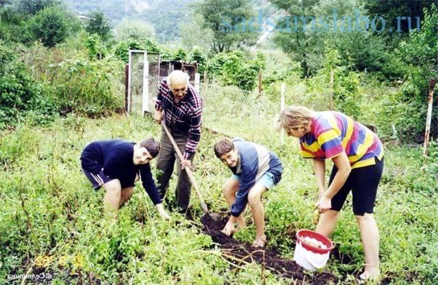 30 дел, которые надо сделать в саду, огороде и цветнике в мае
