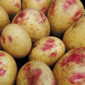 Картофель киви: характеристика и описание сорта, отзывы