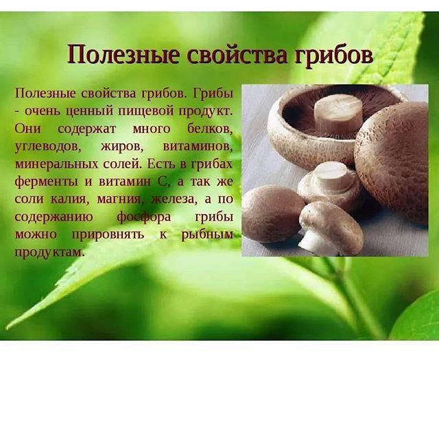 Полезные свойства соленых груздей, химический состав, видео