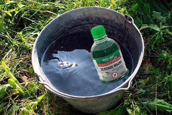 Зелёное мыло – биопрепарат для защиты растений от вредителей