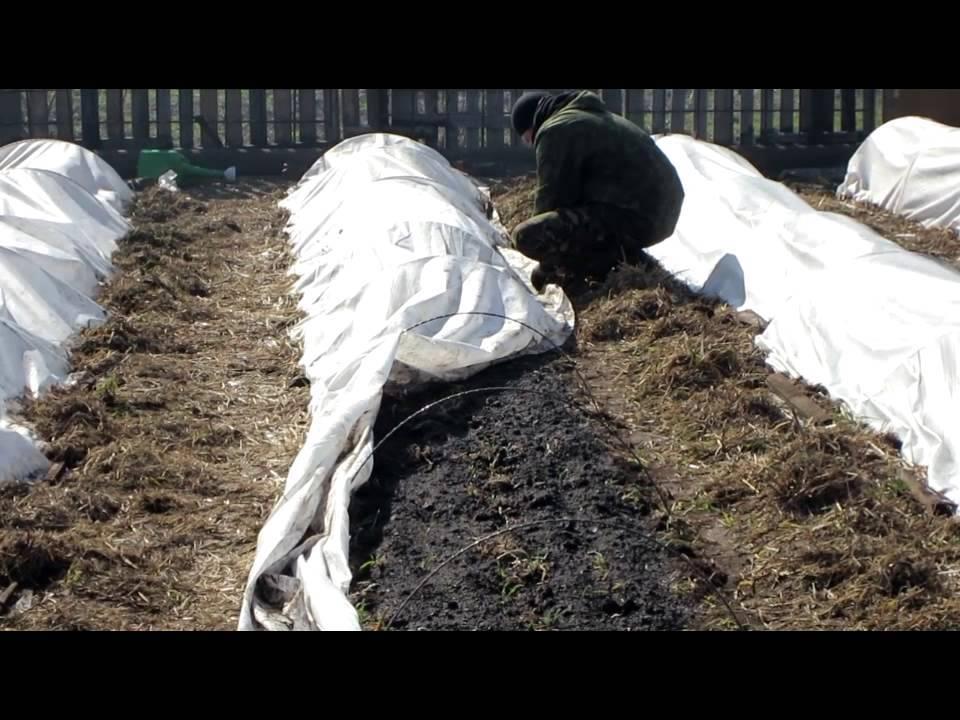 Все о том, какую почву любит редиска и как сделать землю подходящей для выращивания овоща