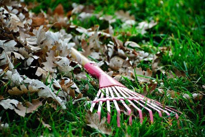 35 дел в саду, огороде и цветнике, которые нужно сделать в мае жителям центрального региона