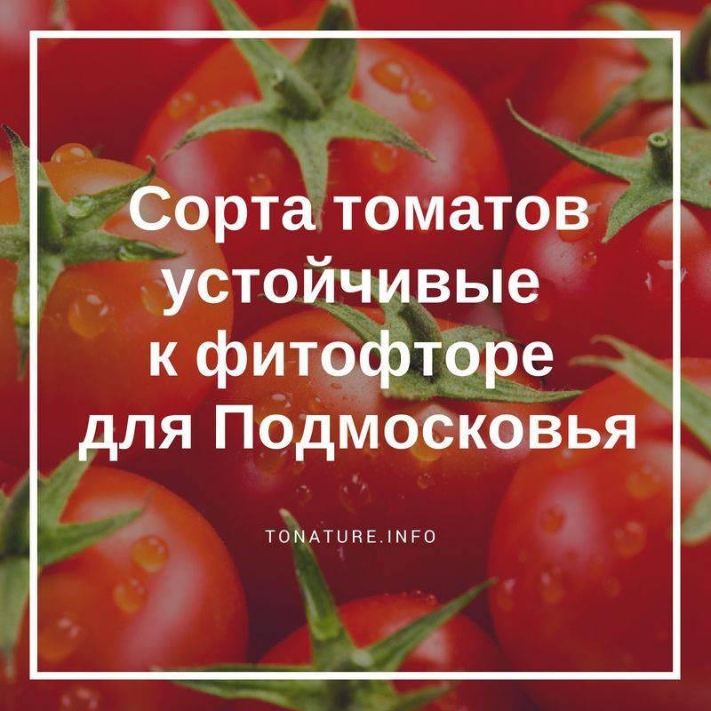 Сорта помидоров, устойчивые к фитофторозу