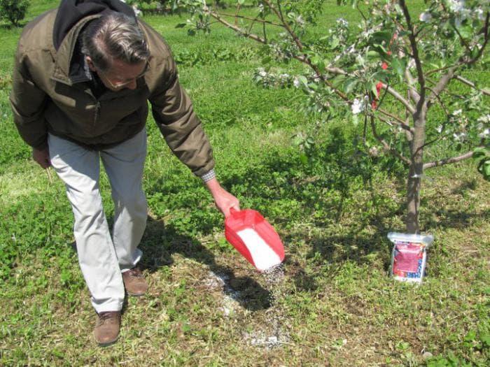 Все о подкормках для груши: как и когда это делать. чем подкармливать грушу весной для роста и урожая