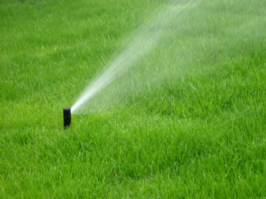 Основные правила и секреты подкормки газонной травы