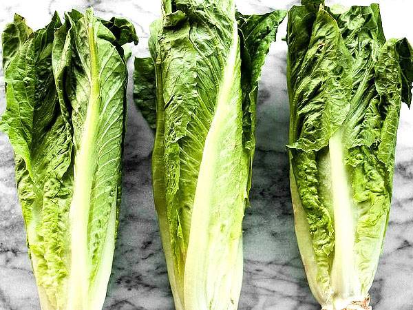 Как вырастить рассаду салата в домашних условиях