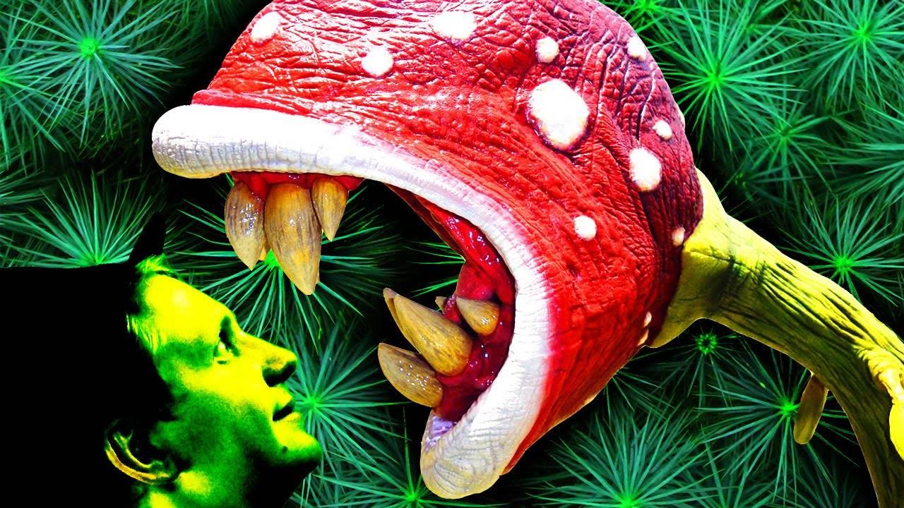 Ядовитые растения вокруг нас