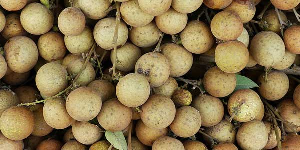 Экзотический фрукт лонган, калорийность, полезные свойства