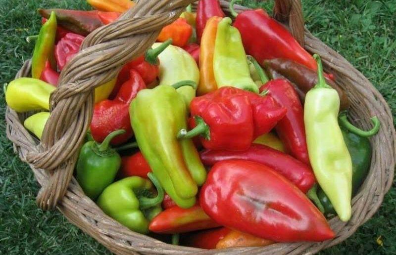 Лучшие сорта толстостенных перцев - фото и описание