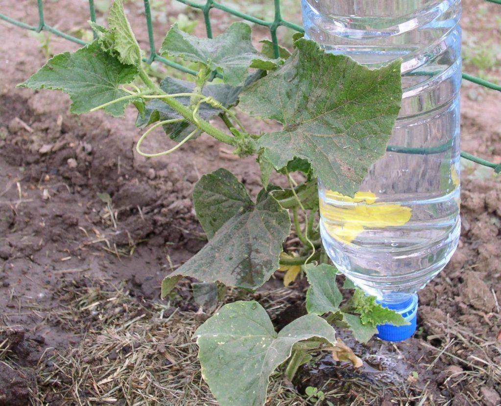 Как организовать полив из пластиковых бутылок