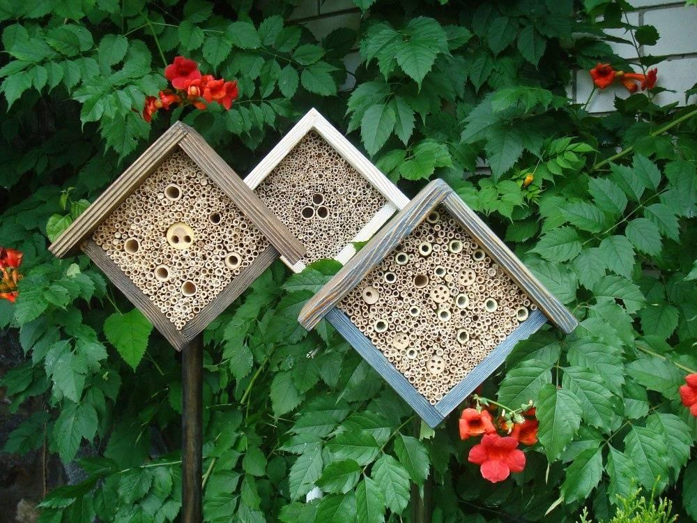 Пчелы в домашних условиях: техника разведения, особенности ухода и содержания
