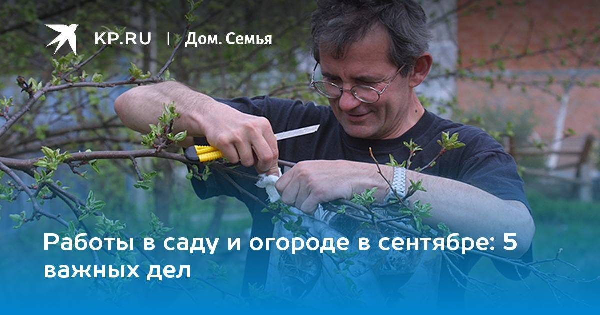 Календарь садово-огородных работ на август