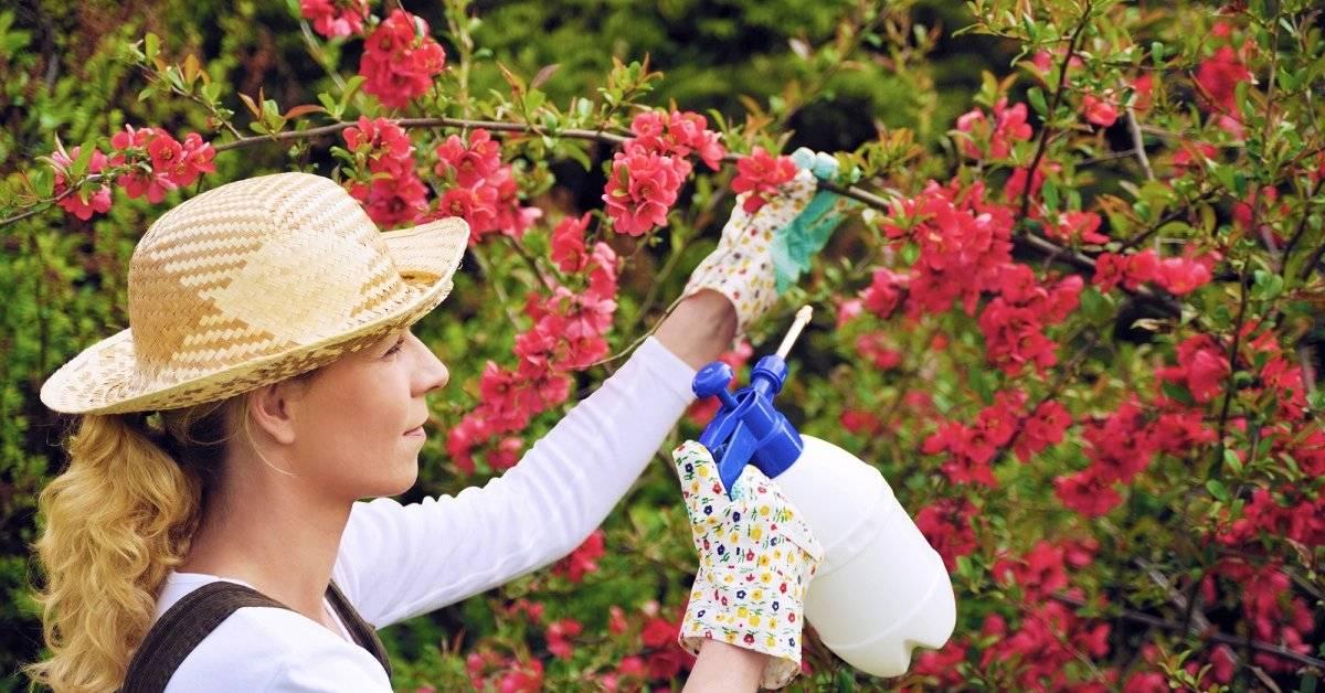 Флоровит — это универсальные удобрения для сада, огорода и комнатных растений