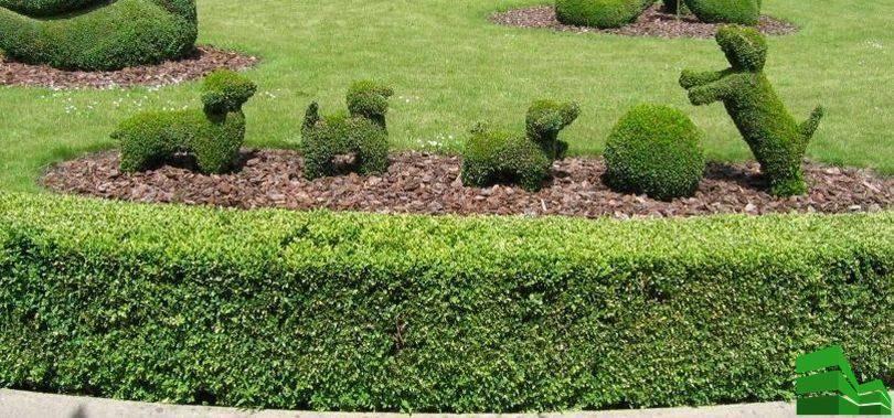 Живая изгородь на даче своими руками: какие растения