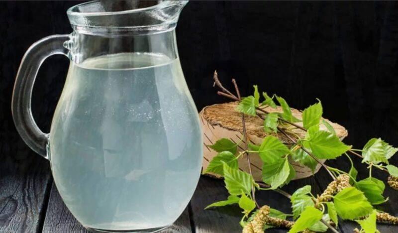 Рецепты самогона на березовом соке — рассмотрим суть