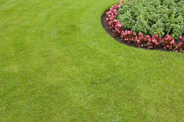В чем преимущества рулонного газона и как правильно его уложить?