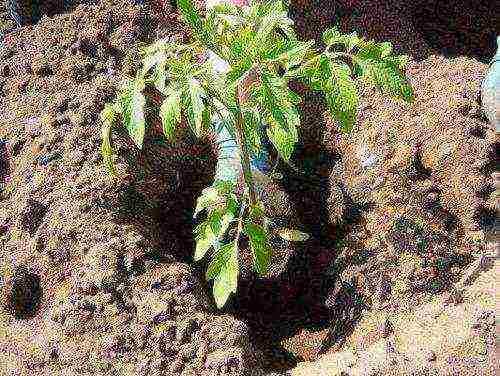 Азофоска – эффективное минеральное удобрение