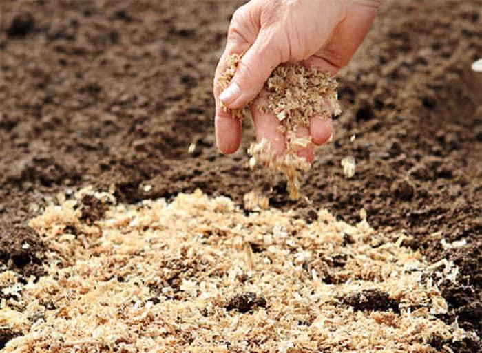 Что лучше всего вносить в почву при посадке моркови: секреты богатого урожая