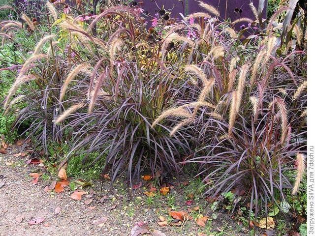Фото и название сорняков в огороде: описание всех видов вредителей