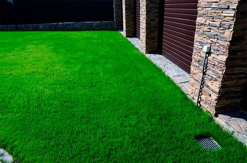 Как выбрать семена травы для газона