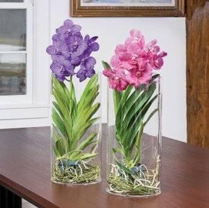 Интересные факты: как рассадить орхидею в домашних условиях?