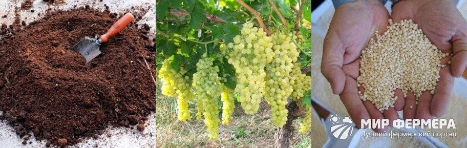 Удобрение и подкормка винограда