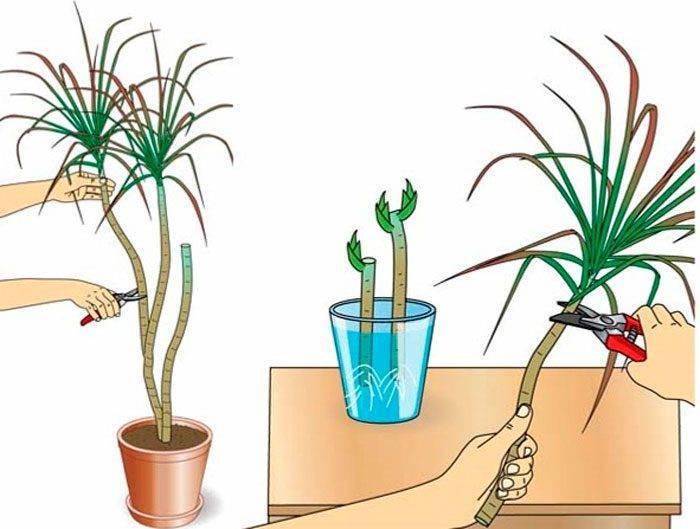 Как посадить дома алоэ своими руками из листа или отростка