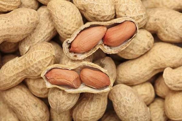 Хозяйке на заметку: как хранить арахис в домашних условиях?