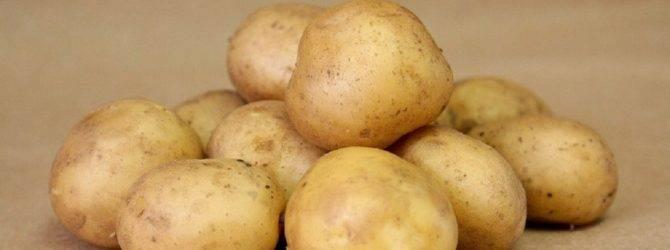 Картофель: список сортов с названиями, фото о описанием