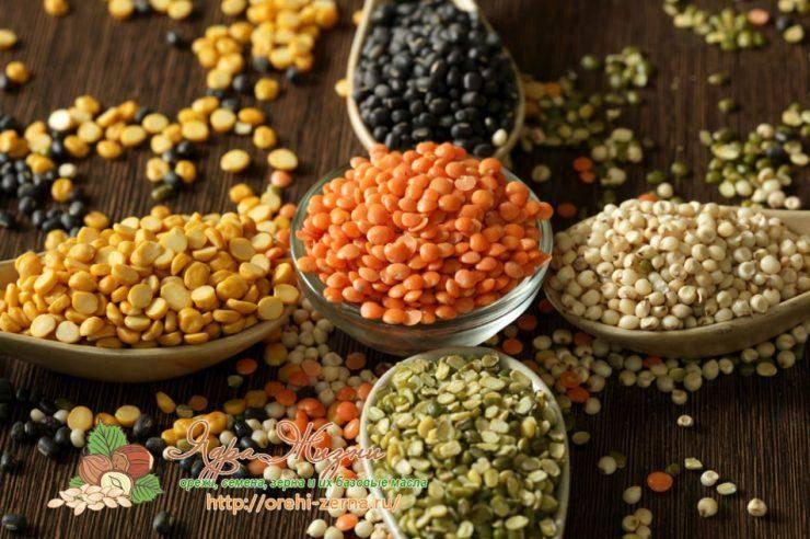 Бобовые продукты: калорийность, бжу, польза и вред для здоровья