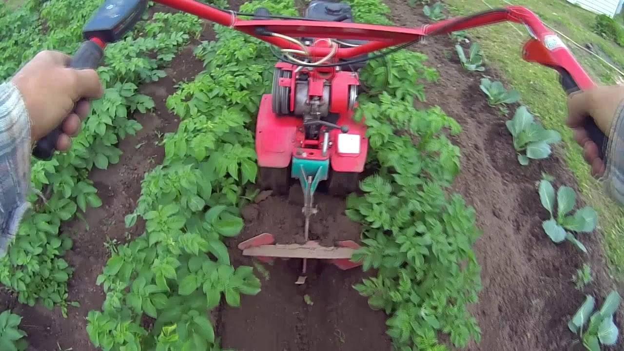 Как правильно окучивать картофель: инструкция + видео