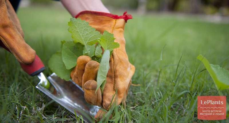 Борьба с сорняками на дачном участке: советы специалистов