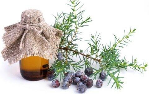 Польза эфирного масла можжевельника