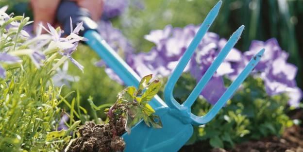Как бороться с сорняками на даче: меры борьбы и способы уничтожения