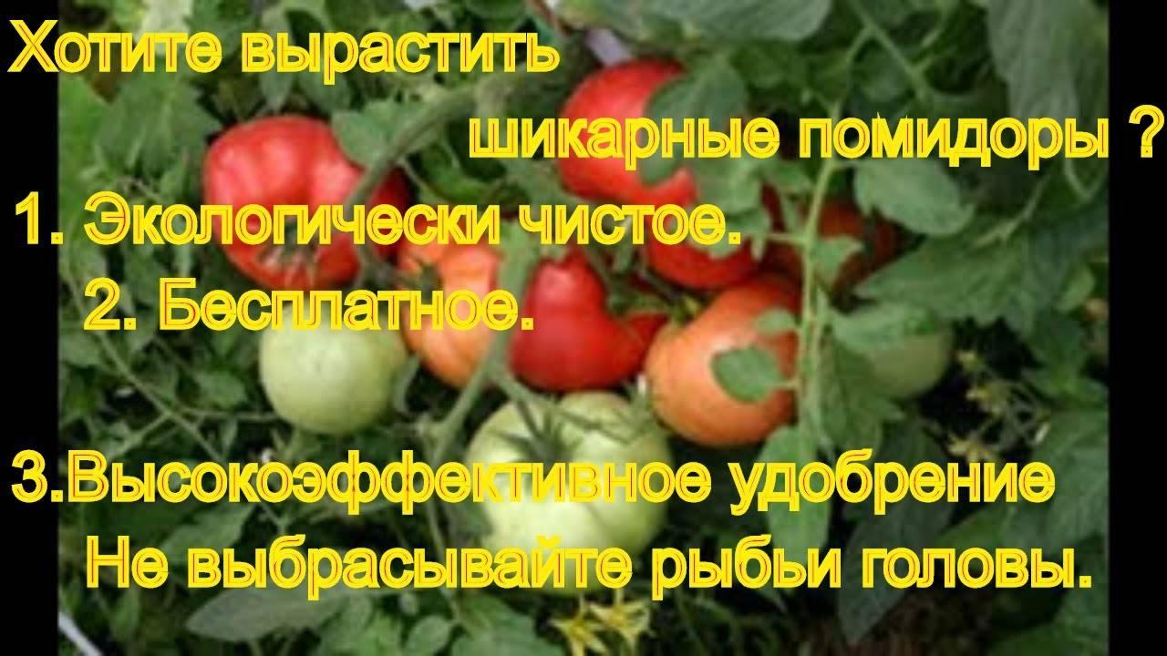 Применение удобрения азофоски для помидоров