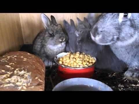 Разведение кроликов в яме: полезные советы для кролиководов