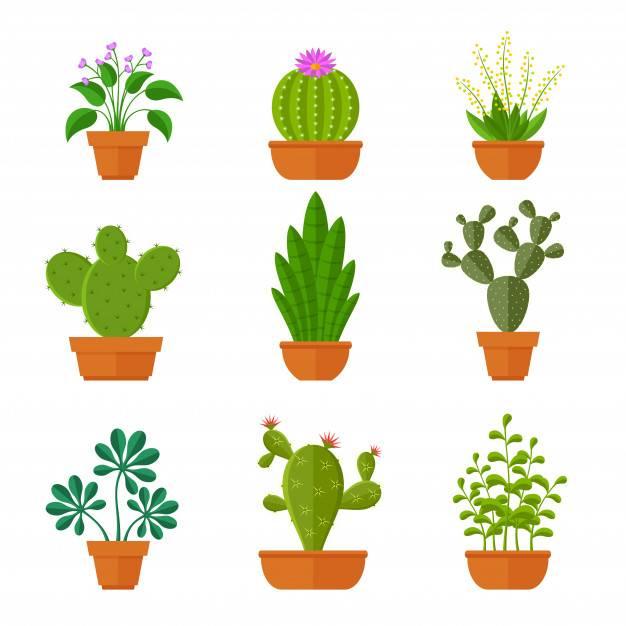 Два способа размножения опунции, их преимущества и недостатки, а также пошаговые инструкции по посадке кактуса