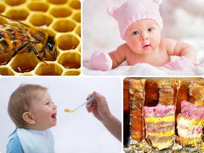 Пчелиная перга – правильное применение и противопоказания