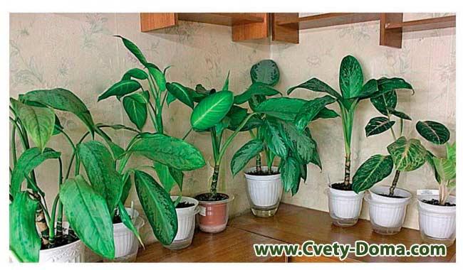 Архив по категории: комнатные растения