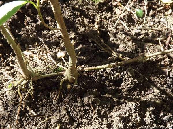 Первая грядка начинающего огородника – советы новичкам