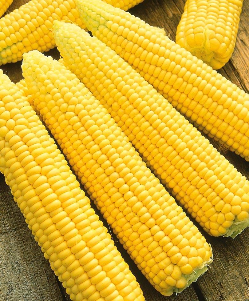 Ранняя кукуруза – секреты выращивания
